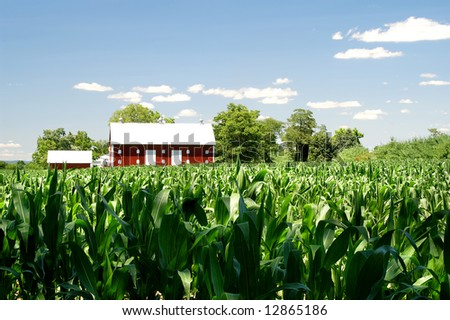 Summertime Red Barn in Corn Field Horizontal With Copy Space - stock photo