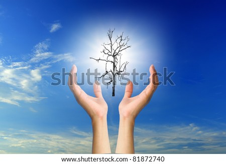 Sun and Dead trees in the hands - stock photo