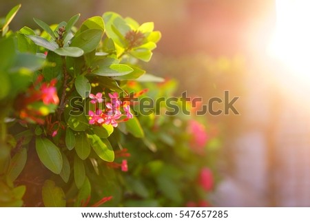 Sun and red flowers