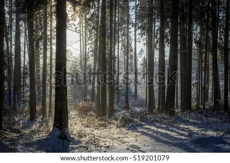 sun and snow in the forest