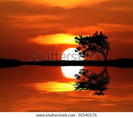 sun and tree - stock photo