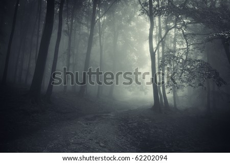 sun beam in a beautiful forest - stock photo
