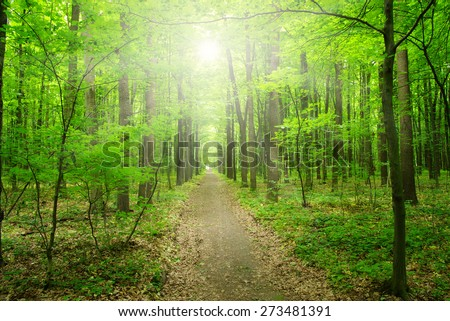 Sun beam in a green forest - stock photo