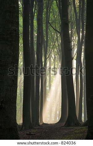 Sun beam in a mist visible through the tunnel formed by tree trunks; photographed early autumn morning. - stock photo