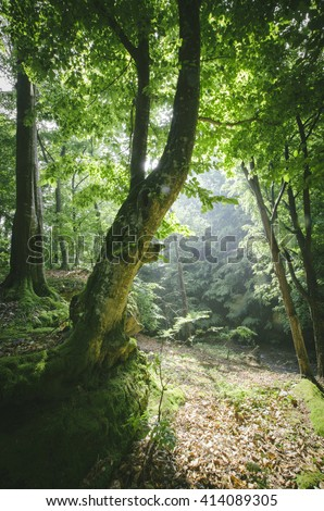 sun beam in green forest with lush vegetation - stock photo