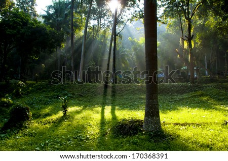 sun beam of light through the summer forest - ray tree wood sunlight shine park scenery countryside wilderness