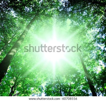 Sun Beaming Through - stock photo