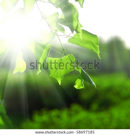 Sun beams and green leaves over bright background - stock photo
