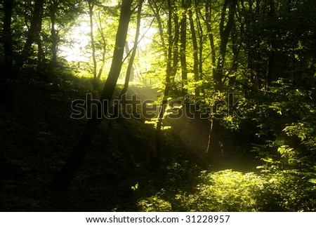 Sun beams in dark forest