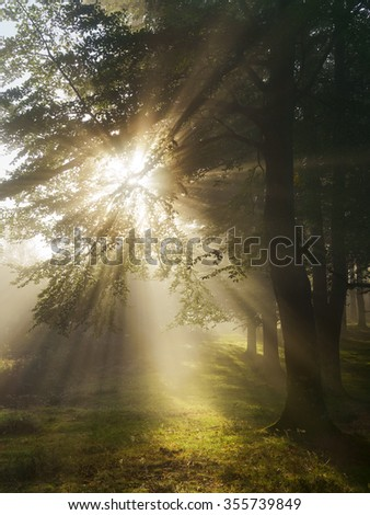 Sun beams in the forest at morning