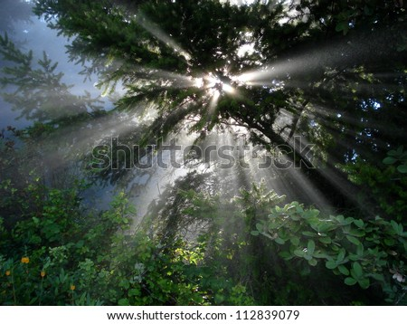 Sun beams thorough trees and greens (Northern California, USA) - stock photo
