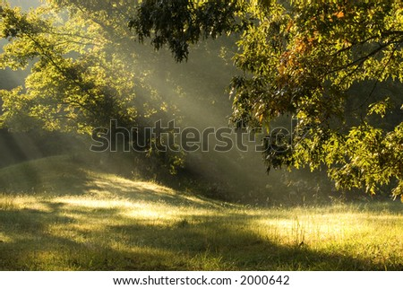 Sun beams through the fog through the trees in rural Tennessee - stock photo