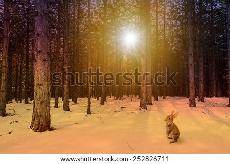 sun behind the trees and rabbit - stock photo