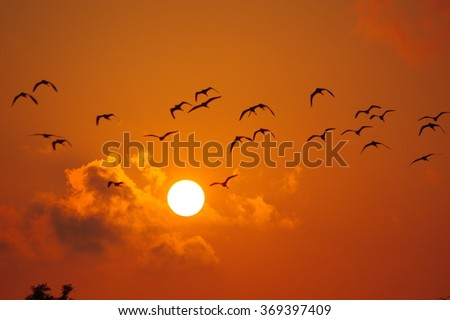Sun birds and tree silhouette abstract background