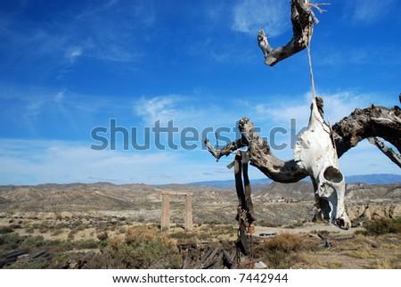 Sun bleached skull of a dead bovine animal in a desert - stock photo