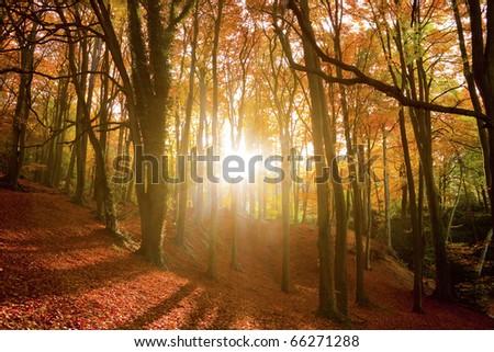 Sun breaking through an autumn forest. - stock photo