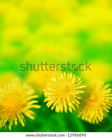 sun dandelion meadow - stock photo