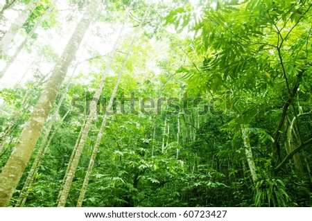 sun-drenched tropical forest - stock photo