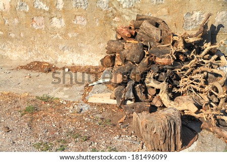 Sun drying pile of dead wood