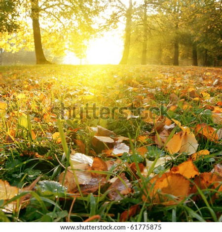 Sun in autumn park. - stock photo
