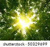 Sun in deep forest background - stock photo