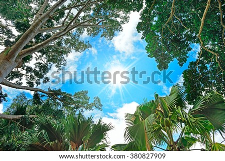 sun in the sky and background of tree branches - stock photo