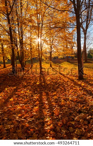 Sun is shining through the crown of the tree in city park of Liepaja, Latvia in autumn. Footpath is covered with golden leaves.
