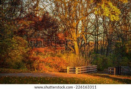 Sun kissed trees during Fall in Wisconsin - stock photo
