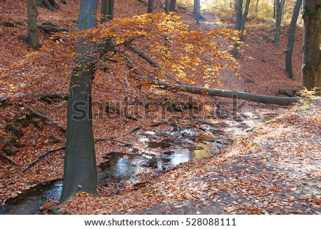 Sun light and autumn trees in Dresdner Heide, Saxony, Germany