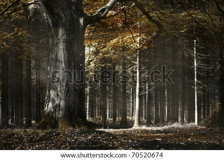 Sun light shines through a wood in autumn - stock photo