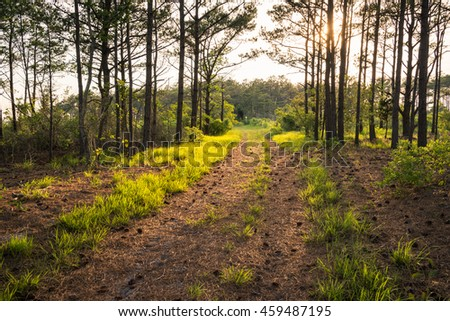 sun lit path in the forest
