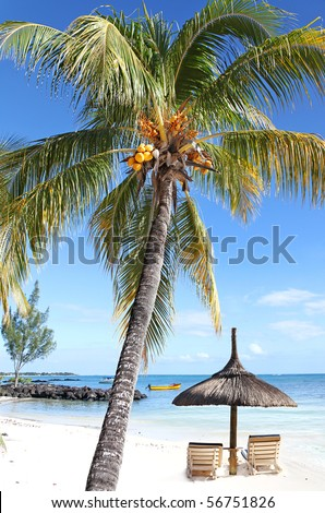 Sun loungers for Two beside a swaying Palm Tree with Co co nuts and gentle lapping Waves on The Shores of The Seychelles - stock photo