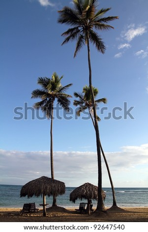 sun loungers, umbrellas and palm trees in early morning next to ocean - stock photo