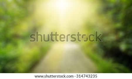 Sun of god,The way wood in the forest spring perspective with yellow sun light ,success symbol nature trees blur background - stock photo