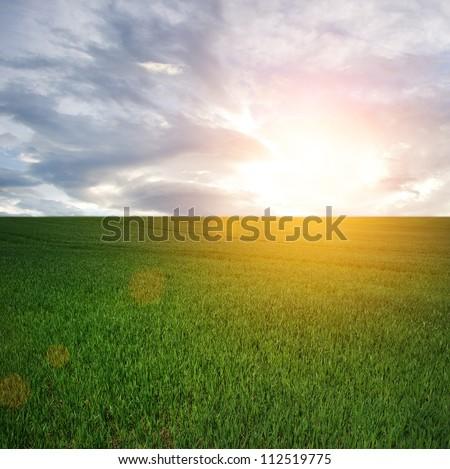 Sun over a field - stock photo