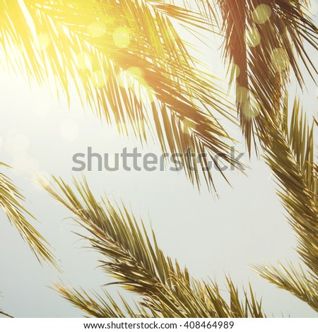 Sun over green palm leaves - stock photo