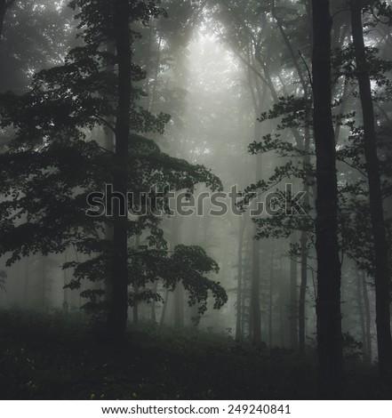sun ray in foggy forest with green trees - stock photo