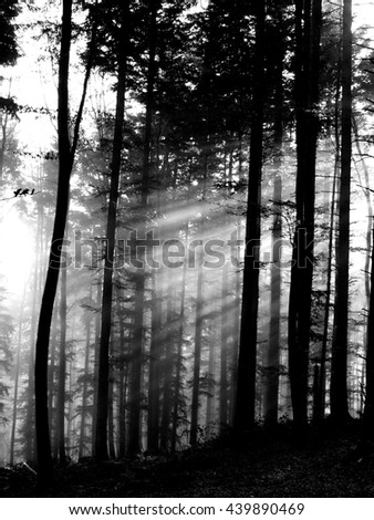 sun ray's in misty winter morning in black and white - stock photo