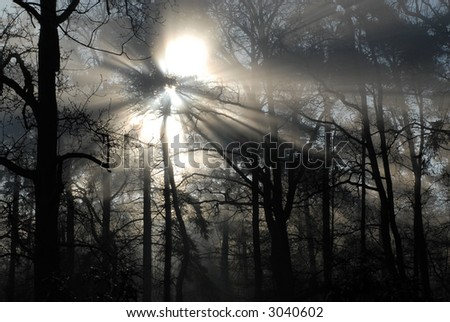 sun rays at a foggy morning through the trees - stock photo