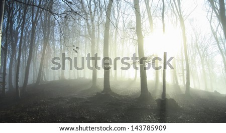 Sun rays coming through the branches in a autumn foggy day into the forest - stock photo