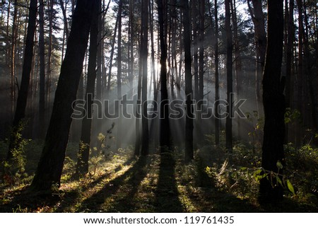 Sun rays crossing a misty forest photographed in an early autumn morning. - stock photo