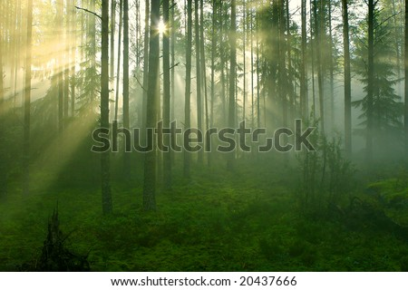 Sun rays crossing a misty forest photographed in an early summer morning. - stock photo