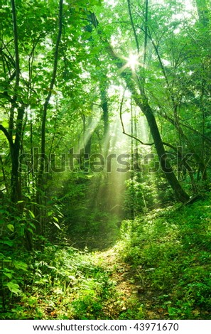 Sun rays deep in the forest in spring in primorska region in slovenia - stock photo