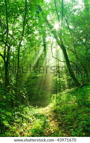 Sun rays deep in the forest in spring in primorska region in slovenia - stock photo