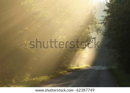 Sun rays falls on the country road leading into the misty deciduous forest. - stock photo