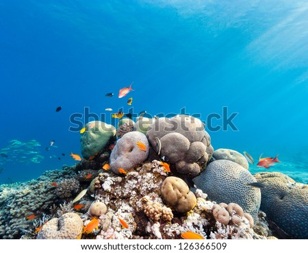Sun rays illuminate a shallow water hard coral pinnacle on a tropical reef - stock photo