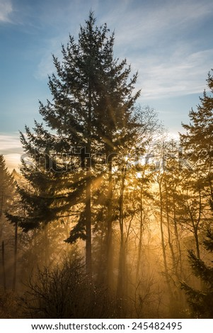 Sun Rays in a Magical Forest with fog and tall trees , Burns bog, Delta , British Columbia, Canada - stock photo
