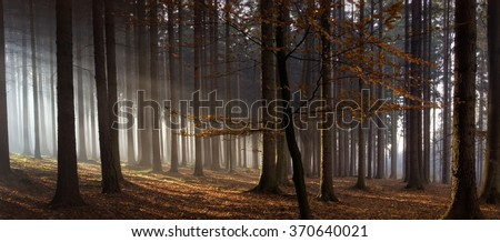 Sun rays in autumn forest - stock photo