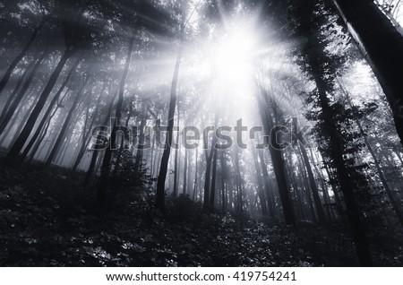 sun rays in dark forest - stock photo
