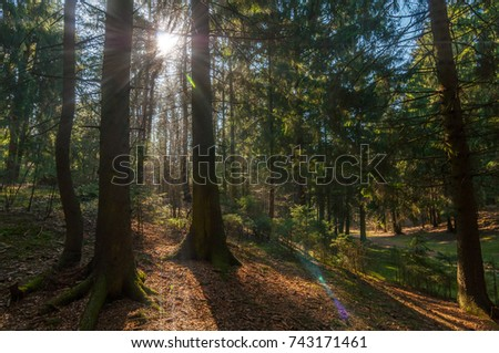 sun rays make their way through the trees in the spring forest